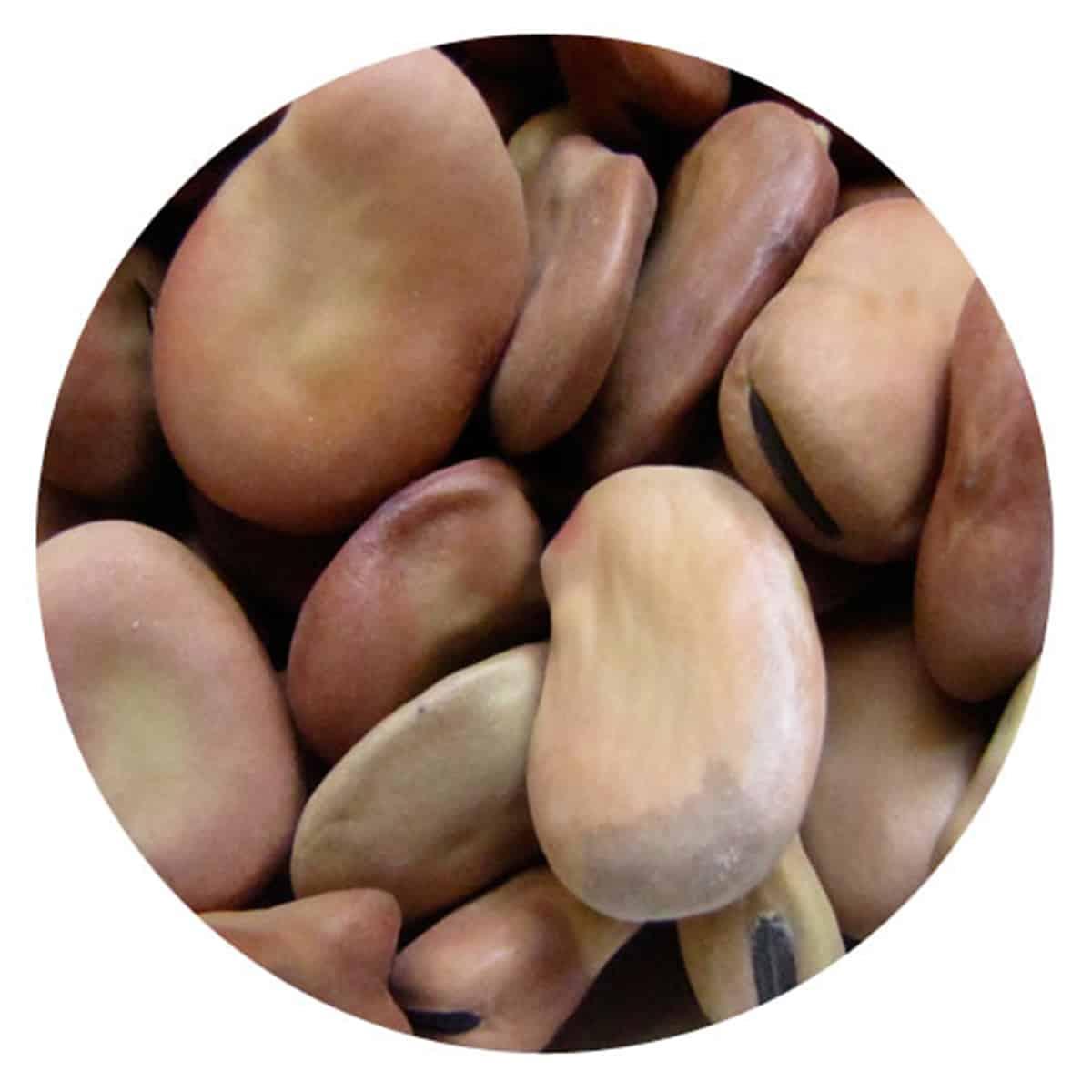 Buy IAG Foods Dried Broad Beans - 1 kg