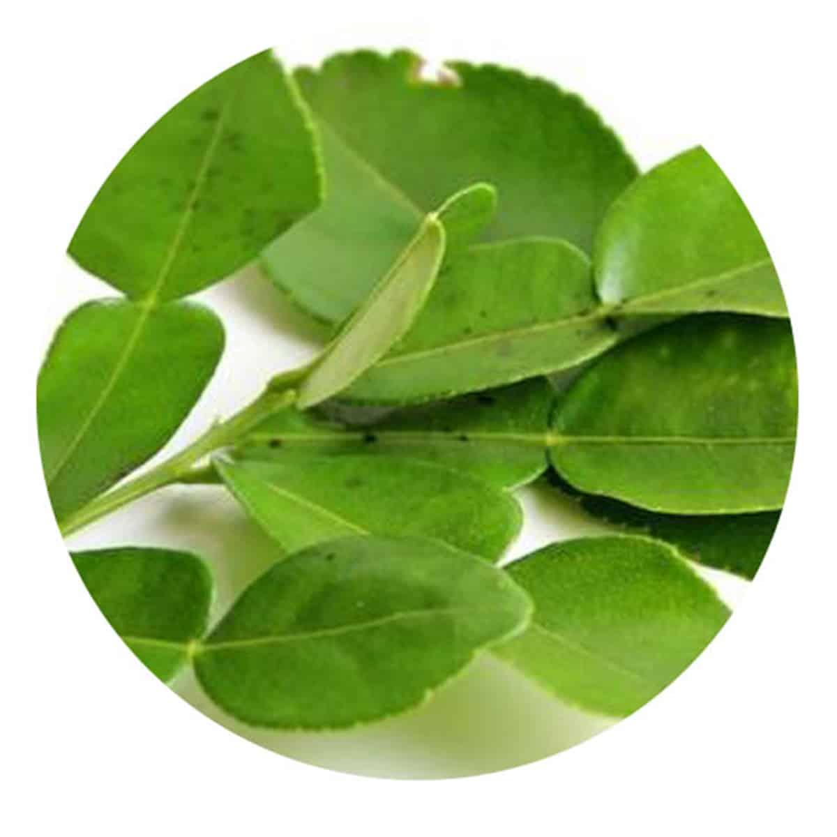 Buy IAG Foods Kaffir Lime Leaves (Frozen) - 95 gm